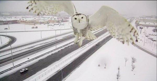 Owl On Camera