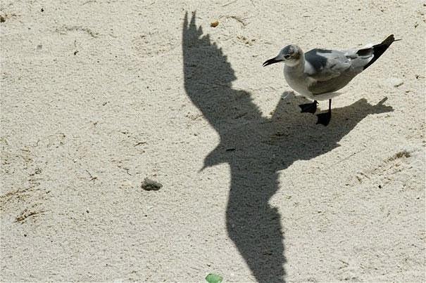 Bird Flying Shadow