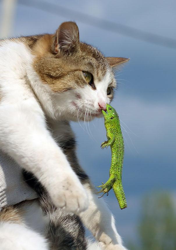 Cat vs Raptile