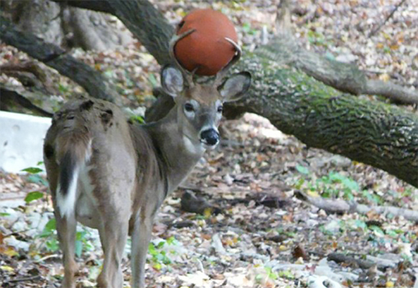 Deer With Ball