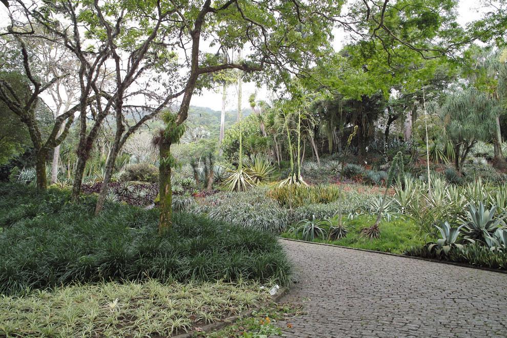 Garden of the Sítio Roberto Burle Marx, Rio de Janeiro, Brazil