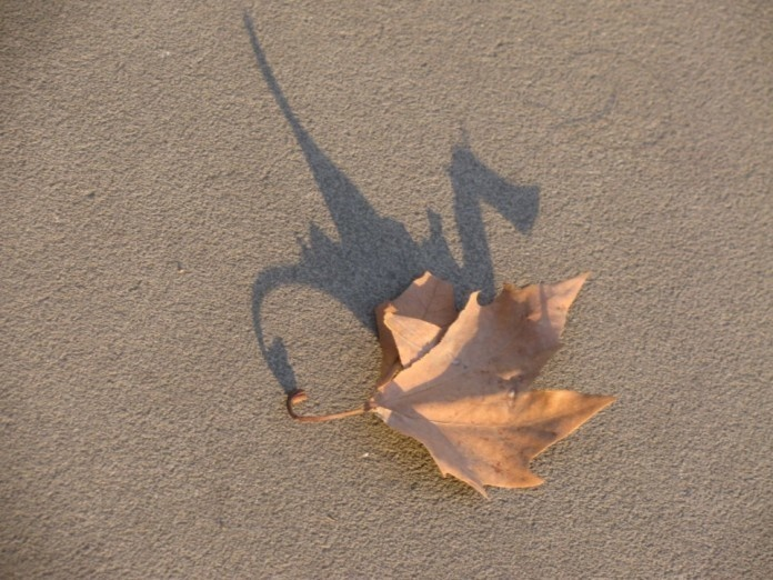 Leaf Shadow