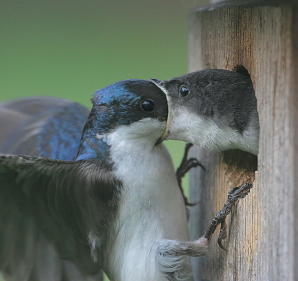 Swallow Mouth To Mouth