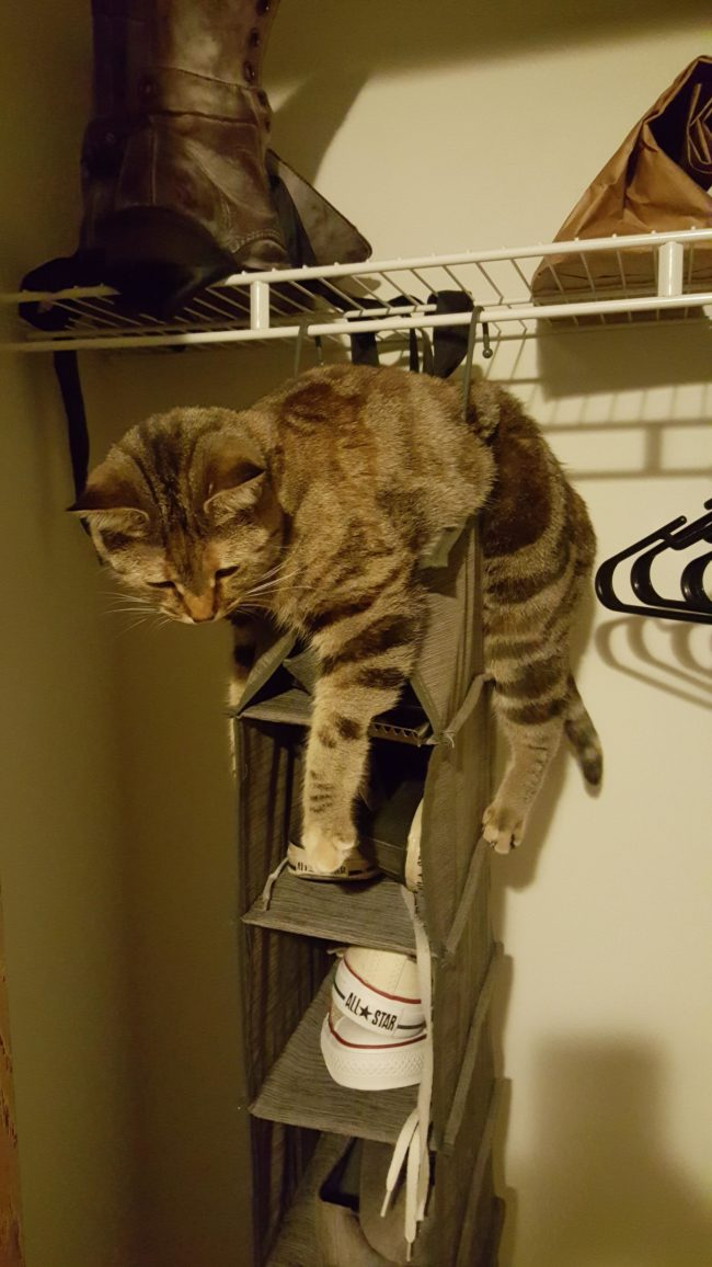 Cat On Rack