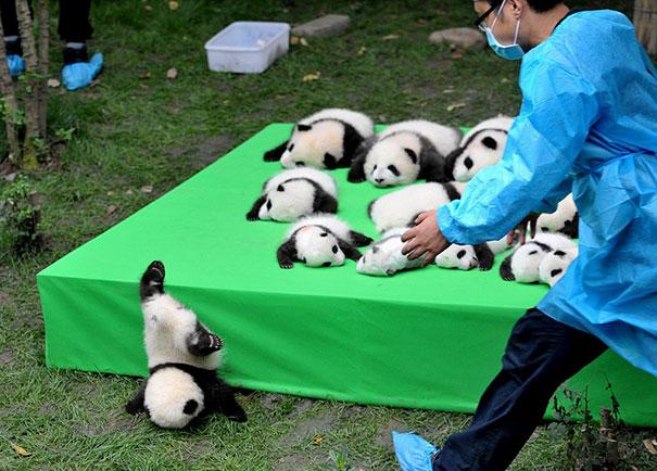 Panda Baby Fun