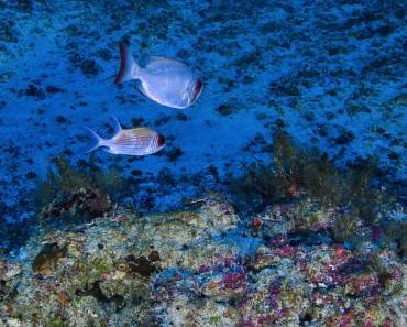 Stunning Underwater Photos-V1
