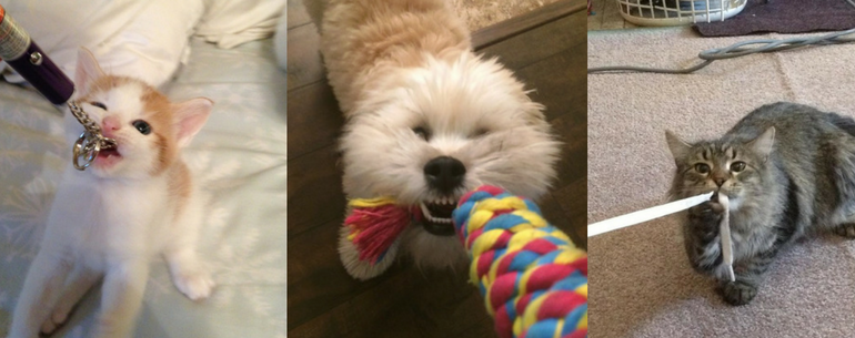 14 Cutest, Furriest Games Of Tug-Of-War That You Want To See Ever