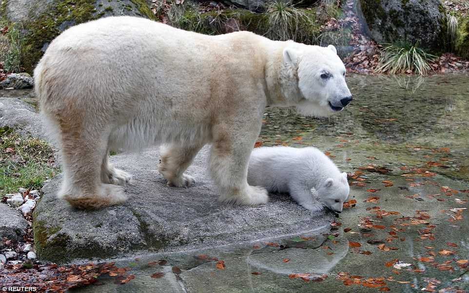Mother Bear and Baby Bear