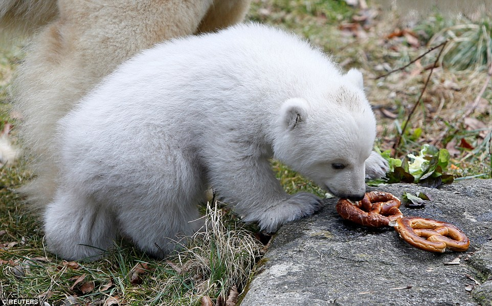 Baby Bear Weight