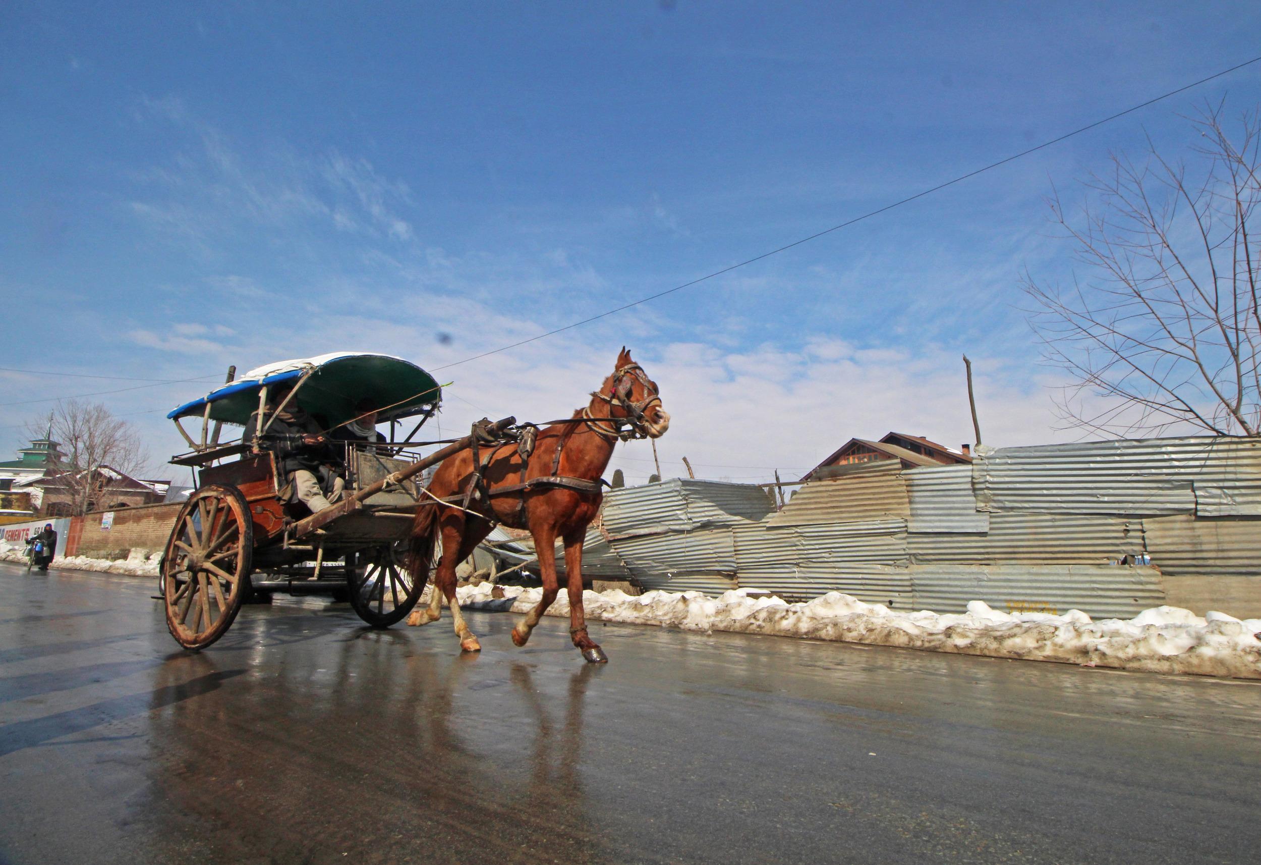Horse Pulling A Passenger Cart