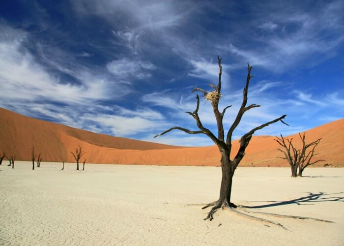 Enormous beauty of Dead Vlei