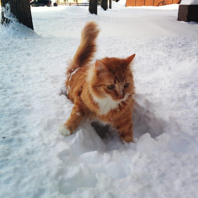 Cat In Ice