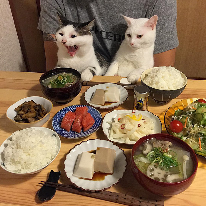 Cats Care About People More Than Food-6