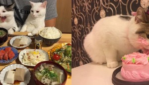 Cats Care About People More Than Food-photos