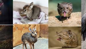 Rare Baby Animals