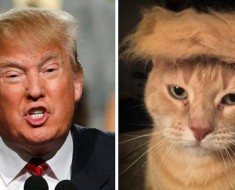 Totally Look Like Donald Trump