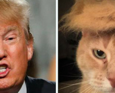 16 things that look like donald trump's twin