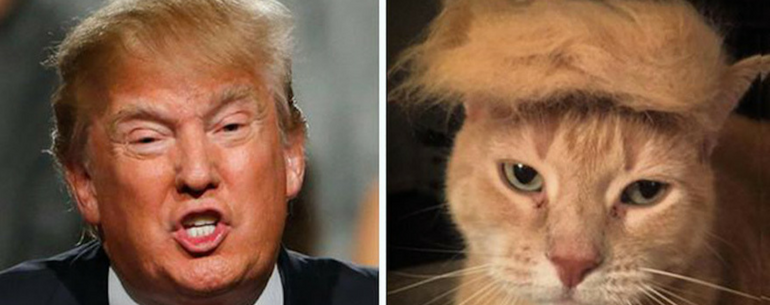 16 Photos That Totally Look Like Donald Trump