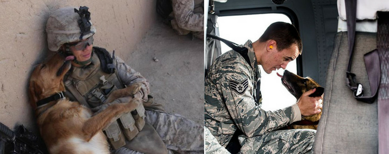 30 Photos Of Service Dogs That Capture Their Incredible Loyalty