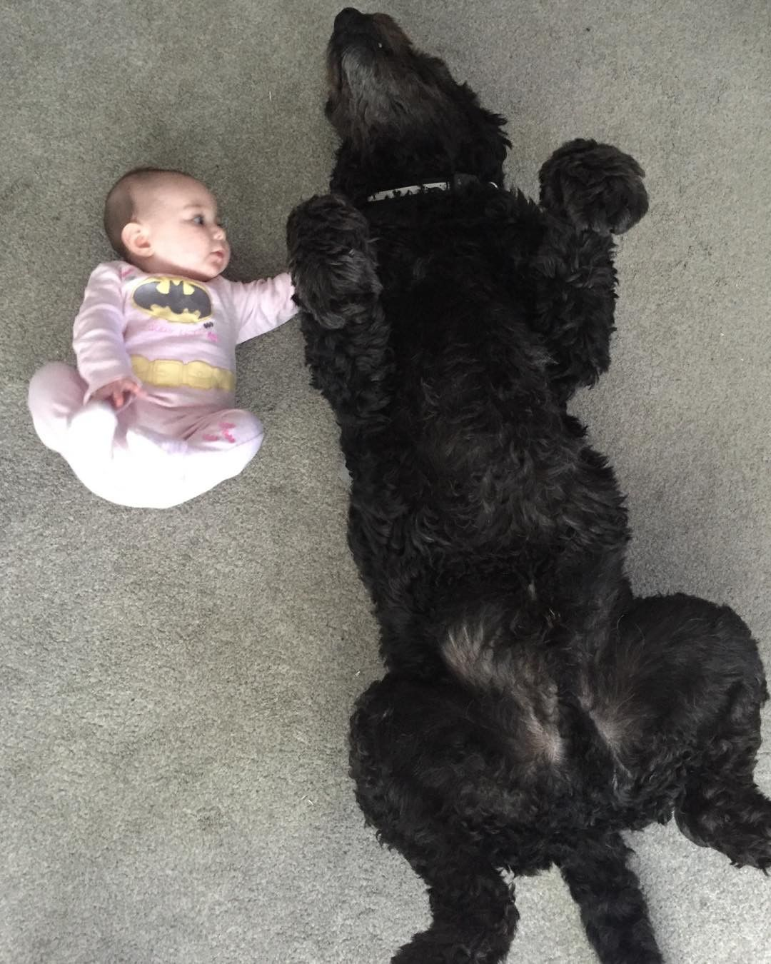 21 Pictures Of Dogs Waiting For Belly Rubs That May Actually Kill You