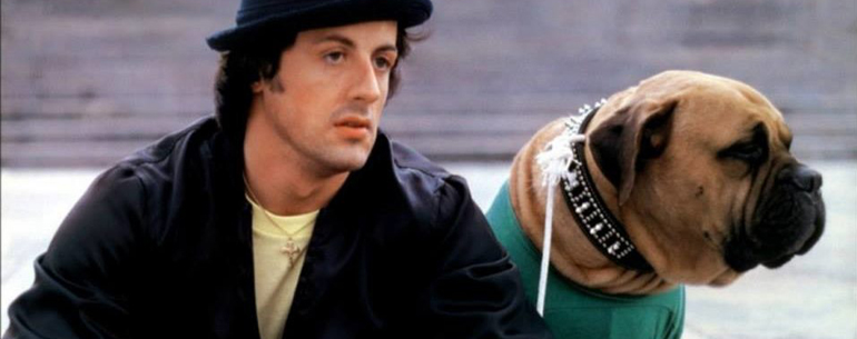 Sylvester Stallone's Sweetest Tribute To His 'Rocky' Dog Butkus Is Just Heart Touching