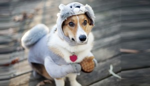 funny photos of dogs