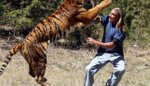 Shocking Animal Attacks On Human