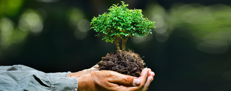 25 World Environment Day Quotes To Save Our Beautiful Earth