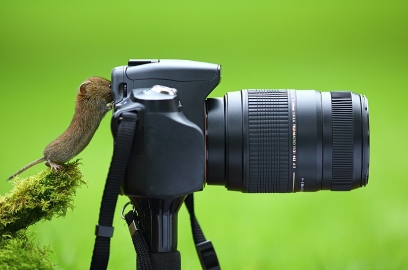 25 AWESOME Animal Photos, Guaranteed To Make You Smile