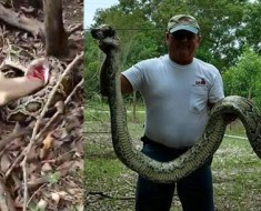 63-Year-Old Man Shot Dead A 12-Ft Python