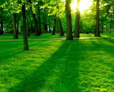 celebrate world environment day 2017
