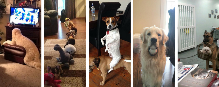 Hilarious Pics Of Dogs Acting Weird