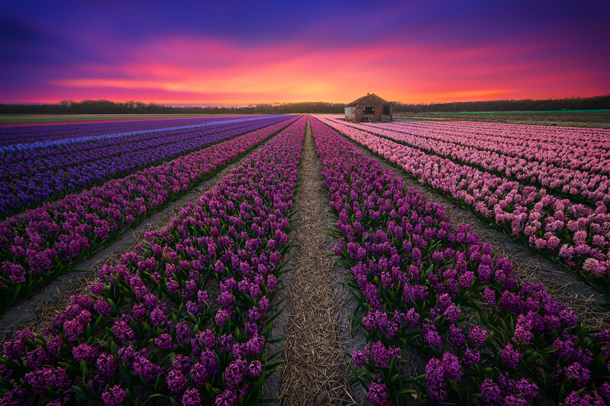 30 Reason Why You Should Visit The Netherlands