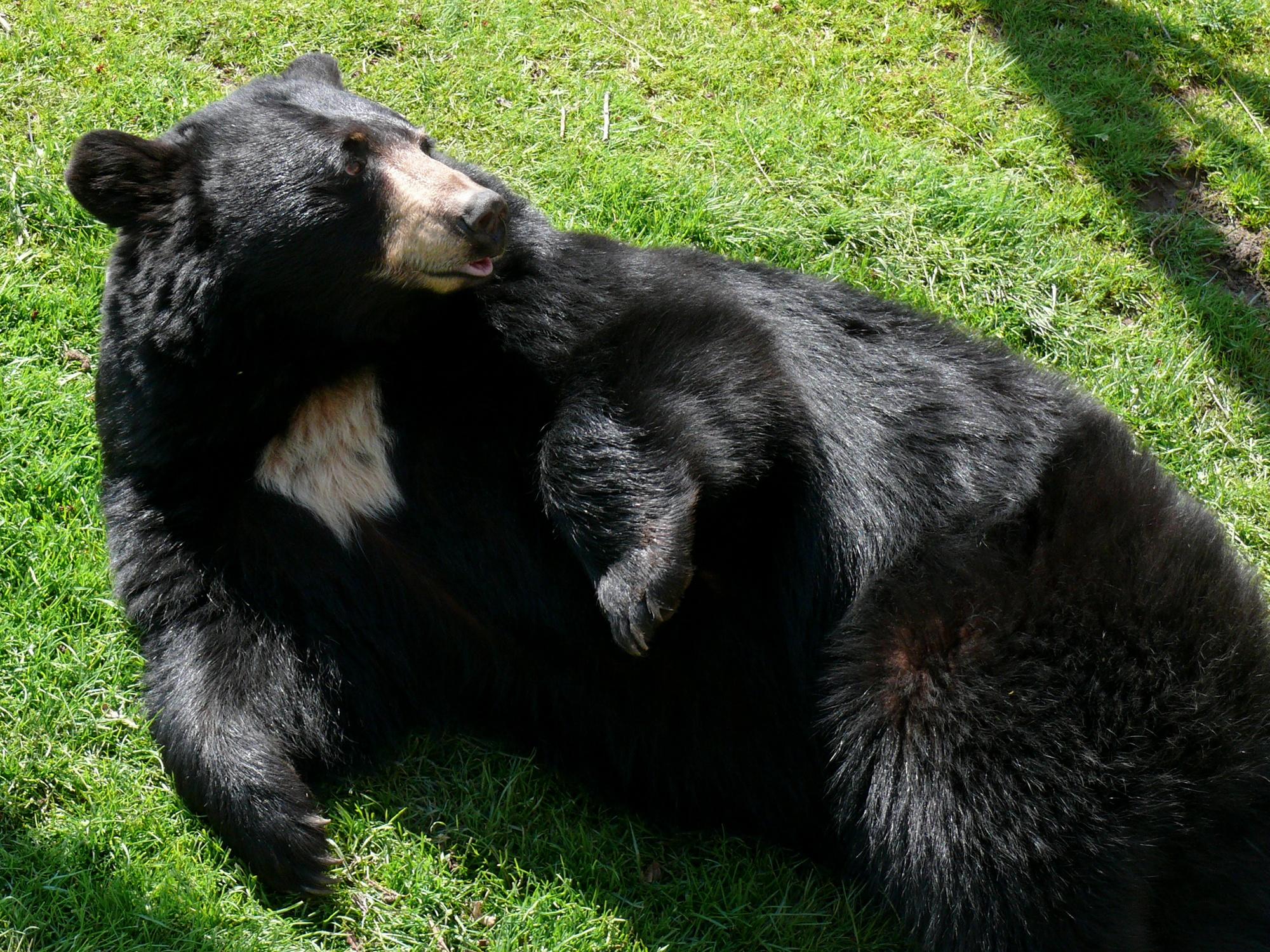Go bear-watching