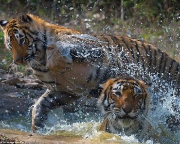 Wonders Of Wild India