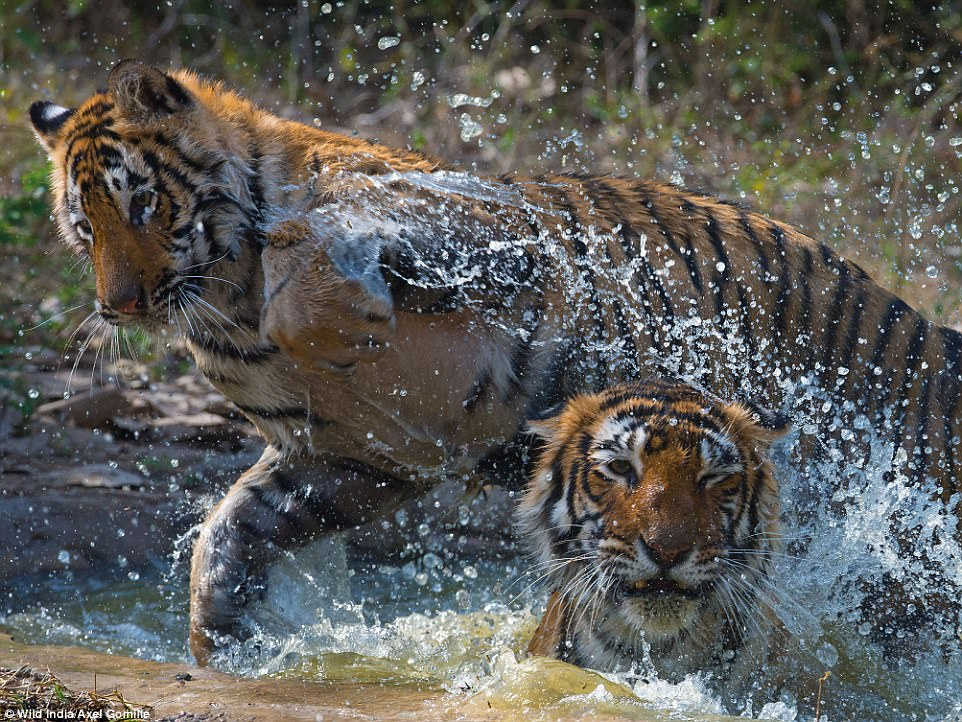 14 Amazing Photographs Show The Wonders Of Wild India