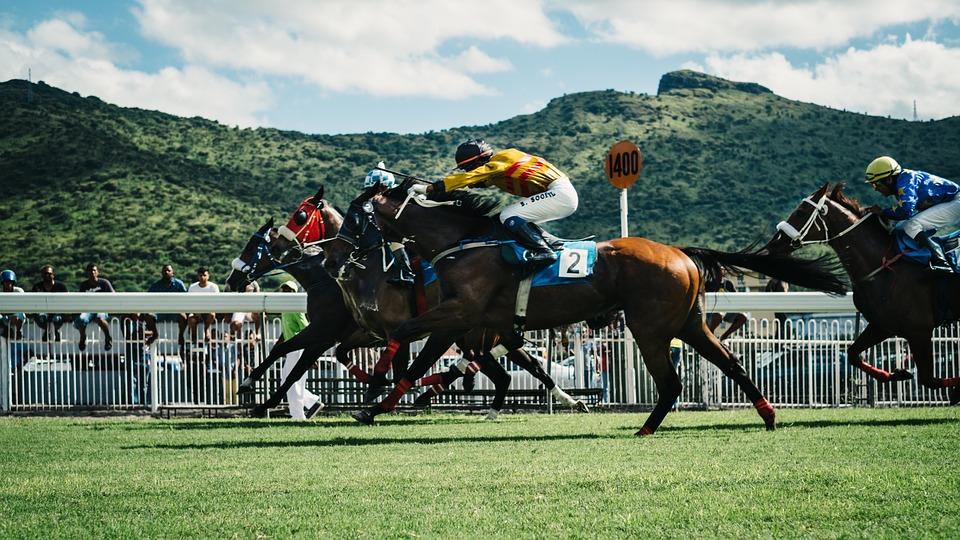 Horse Racing Basics 6