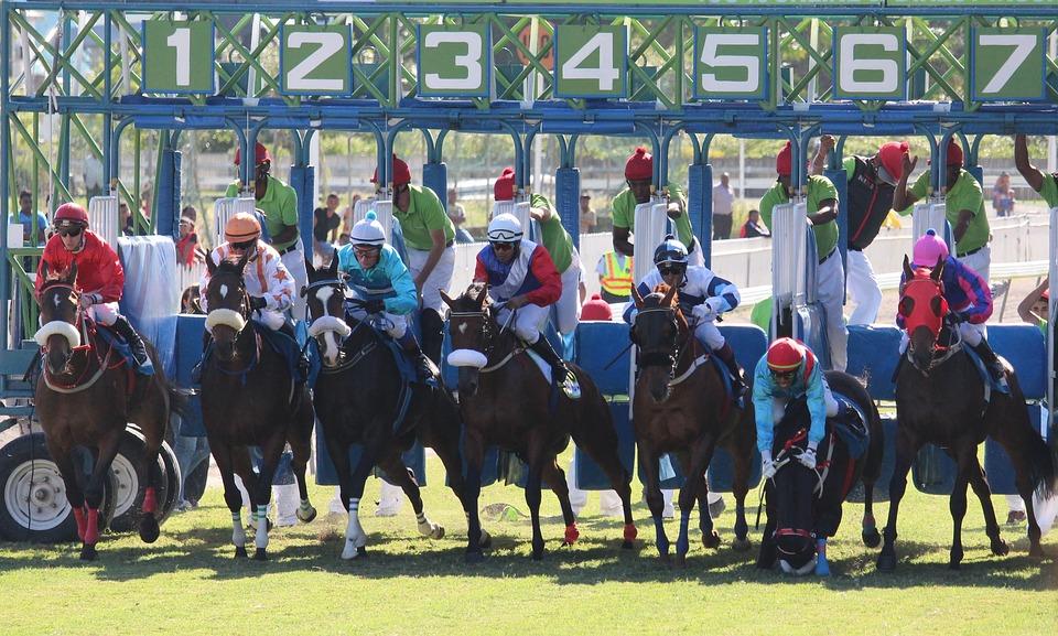 Horse Racing Basics 8