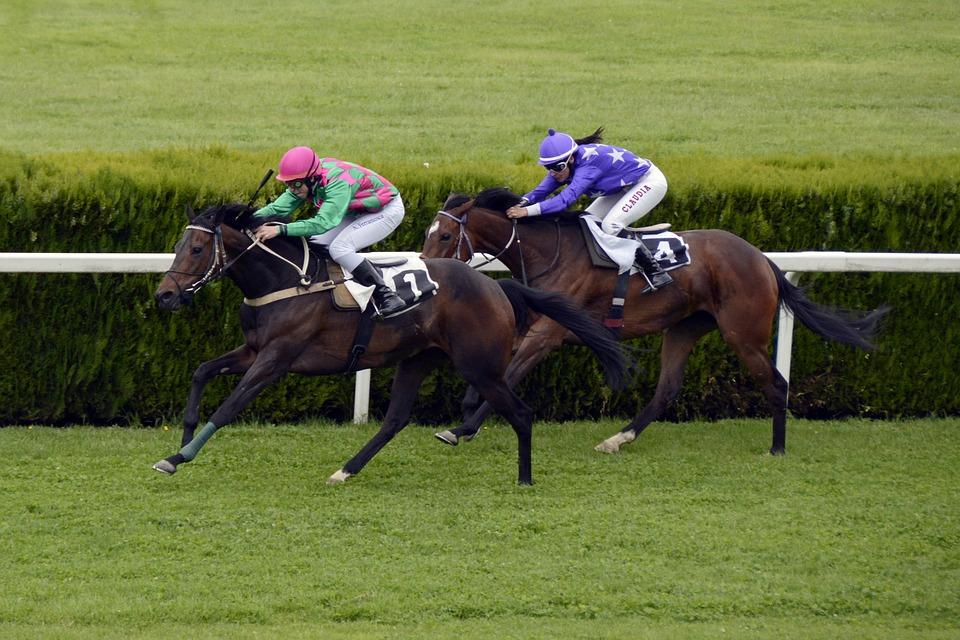 Horse Racing Basics