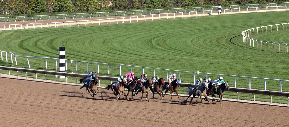 Horse Racing Basics – Various Types of Horse Racing Events