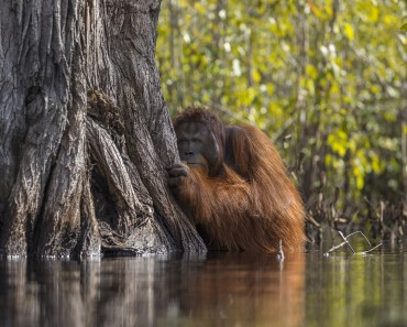 National Geographic Nature Photography Contest