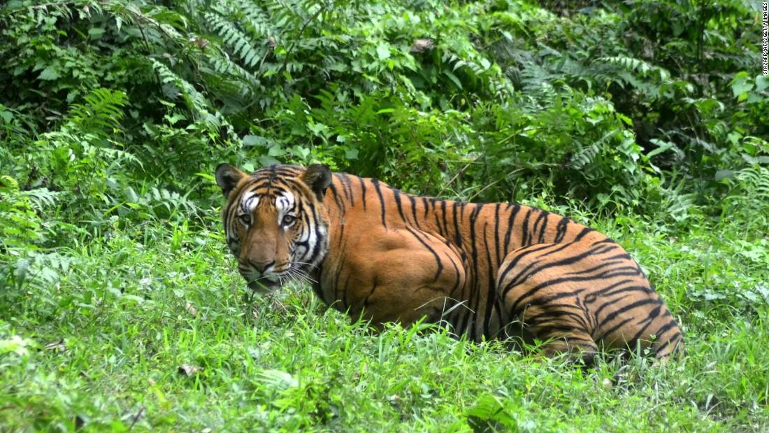 World Tiger Day