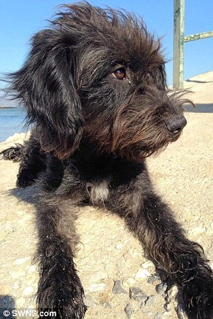 street dog breed