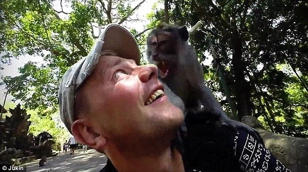 Monkey On His Shoulder