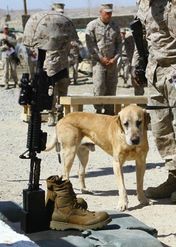 Dog Saying Goodbye