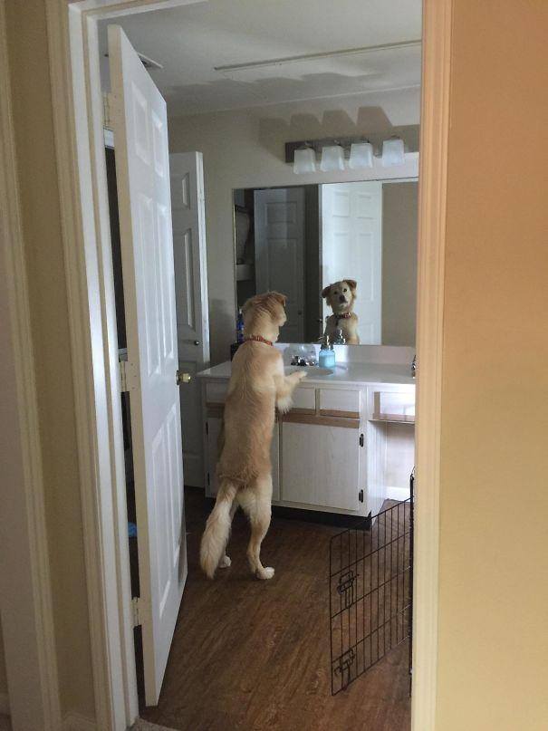 dog videos funny