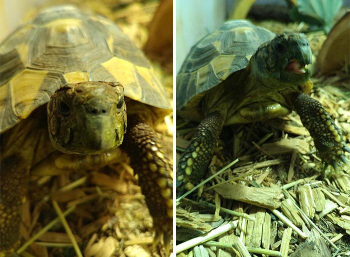 Mr Tortoise