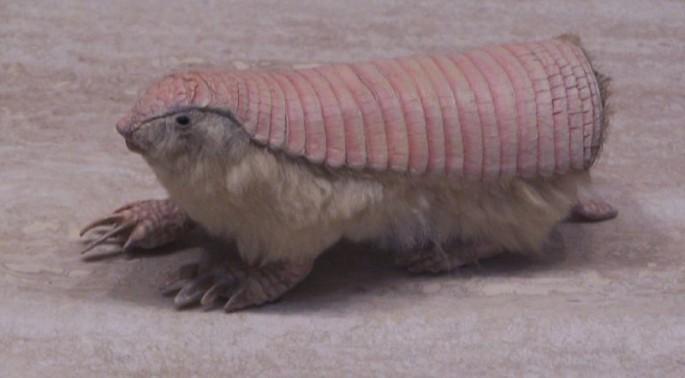 unusual animal facts