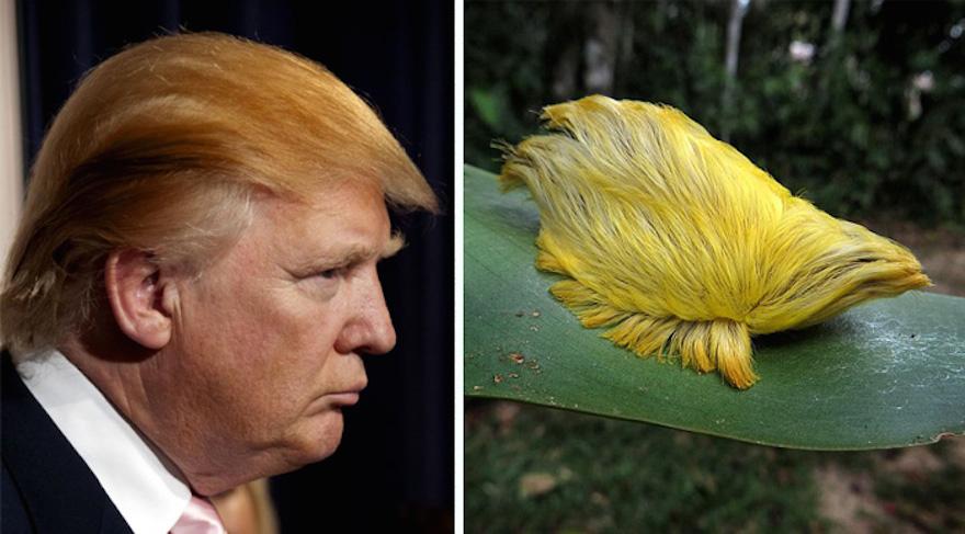 Unique Caterpillar
