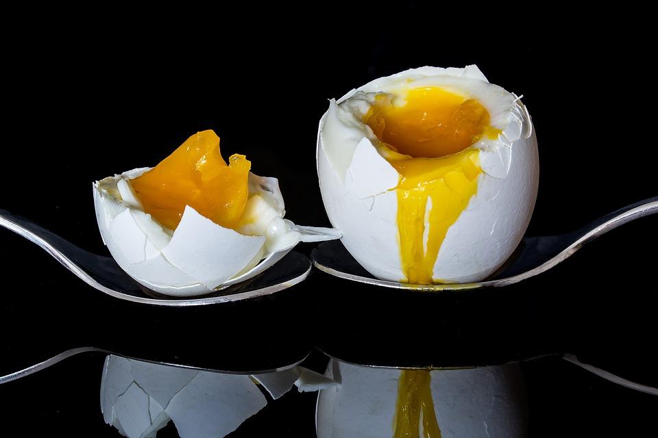 An Egg A Day -V7